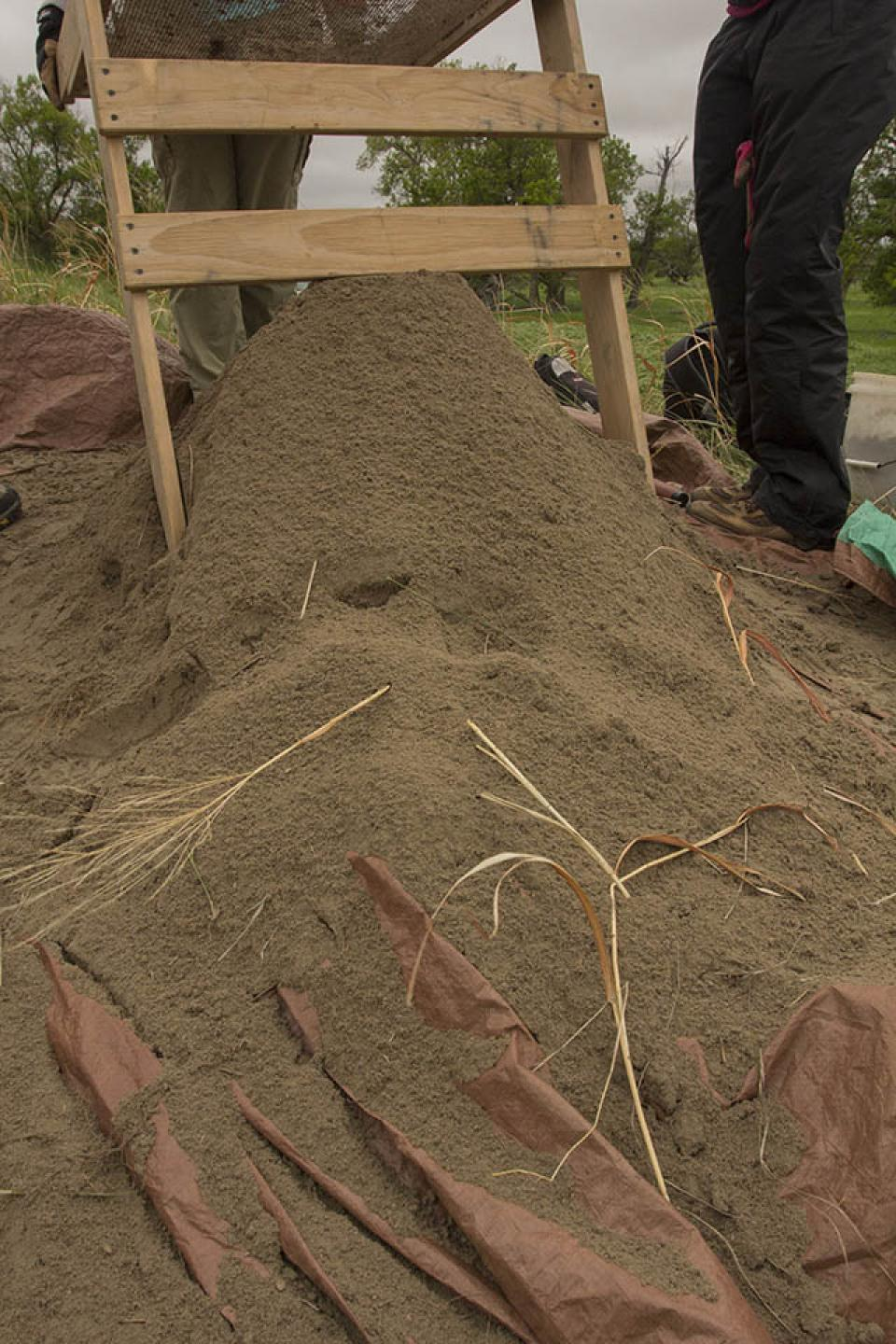 The team screens dirt to recover artifacts found while digging the test unit at Kelso site.