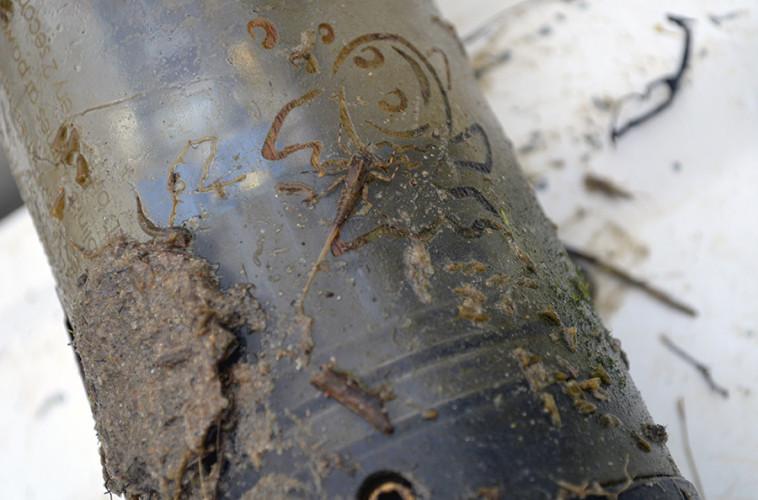 A mayfly larva rests on the sensor. (Emma Brinley Buckley)