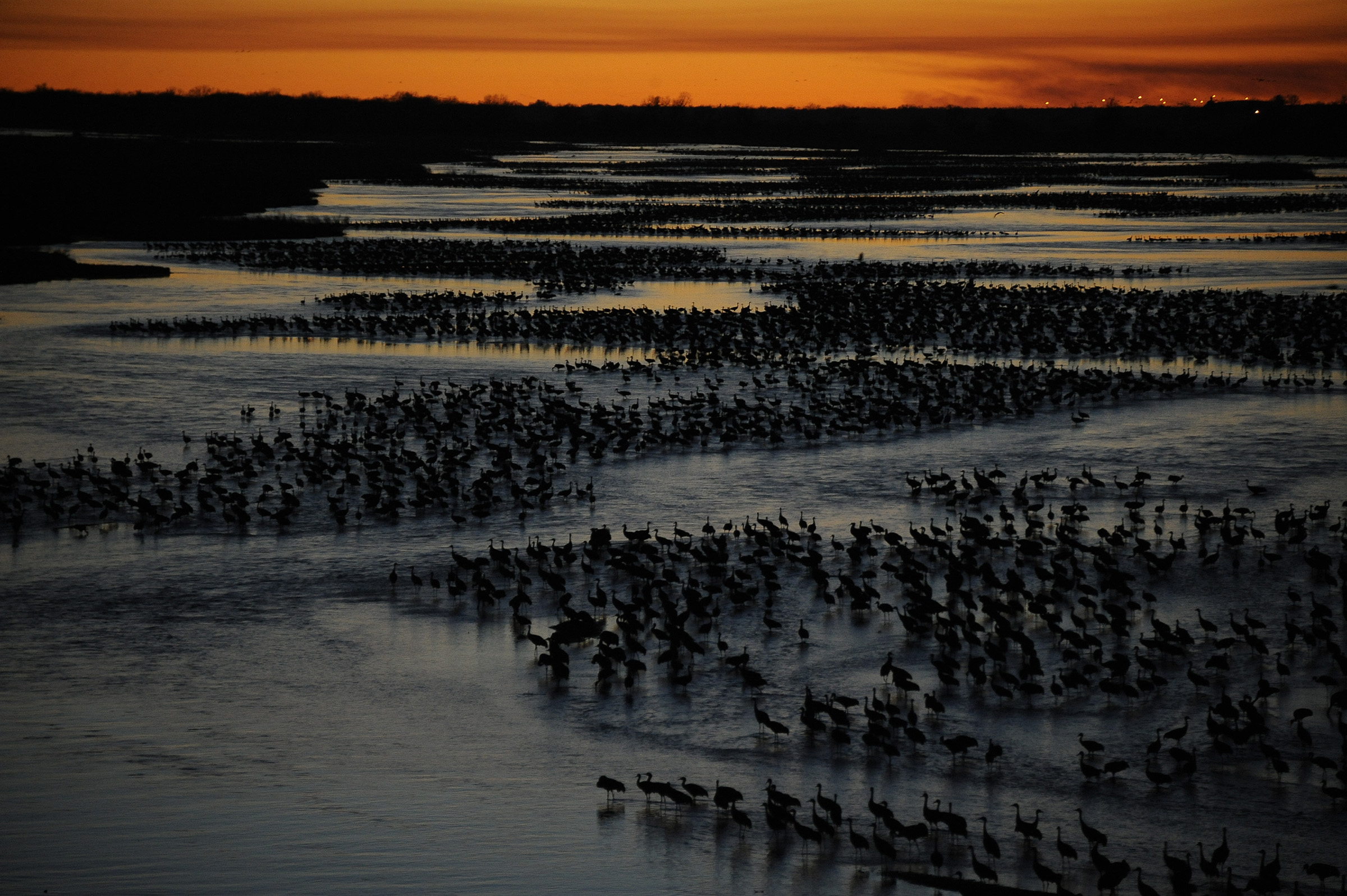 Islands of cranes roost on the braided channels of the Platte River at sunset. (Michael Forsberg)