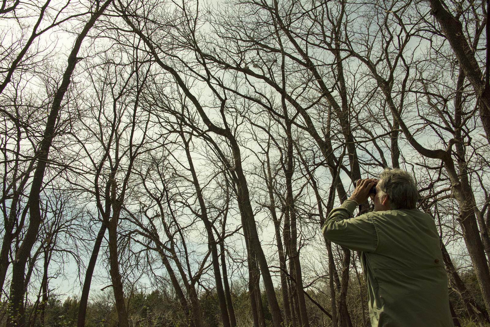 treebirding