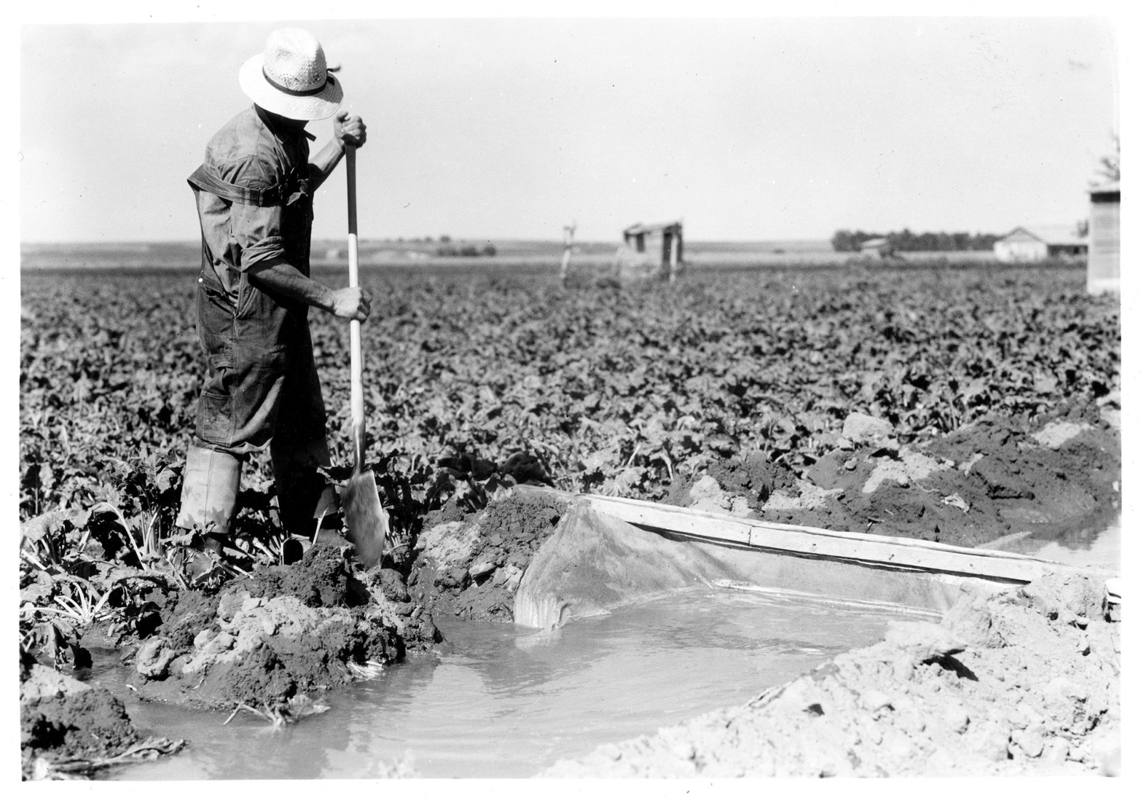 A man adjusts the flow of water to his field in the North Platte Valley of Nebraska. (Nebraska State Historical Society)