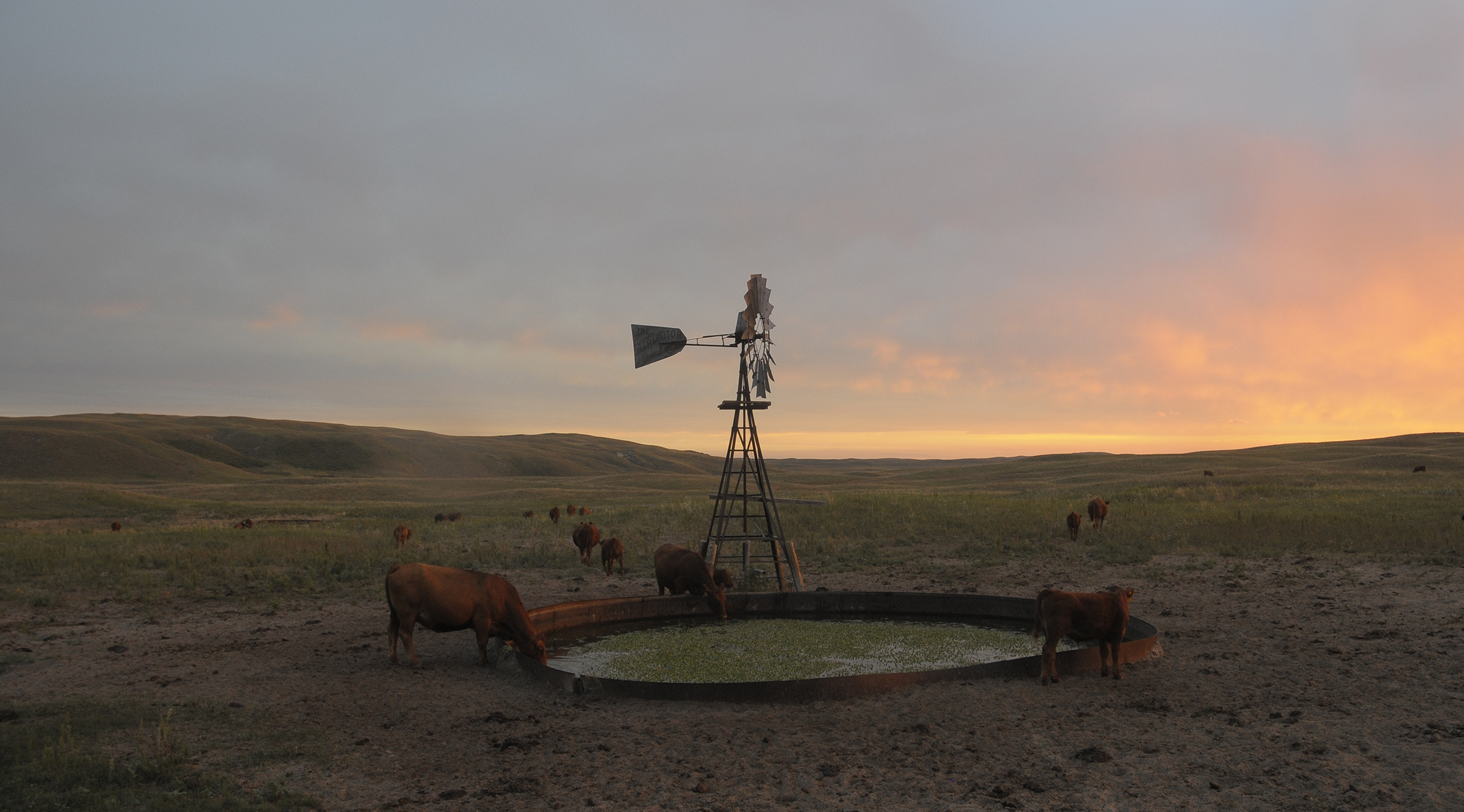 This Sandhills windmill pulls up clear, cold water from the aquifer below, a reliable water supply in a semi-arid landscape. (Michael Forsberg)