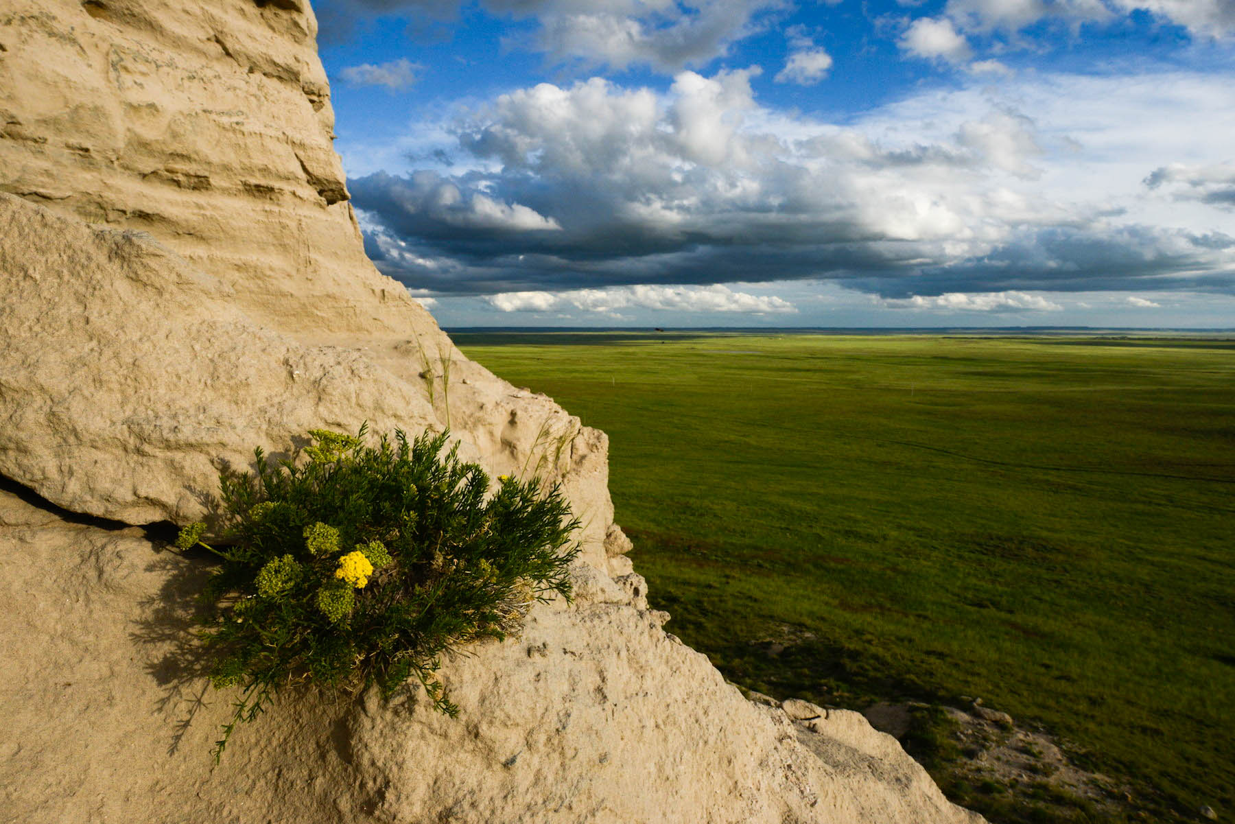 A wildflower boquet grows out of a crack in a sandstone butte in Nebraska's Wildcat Hills.