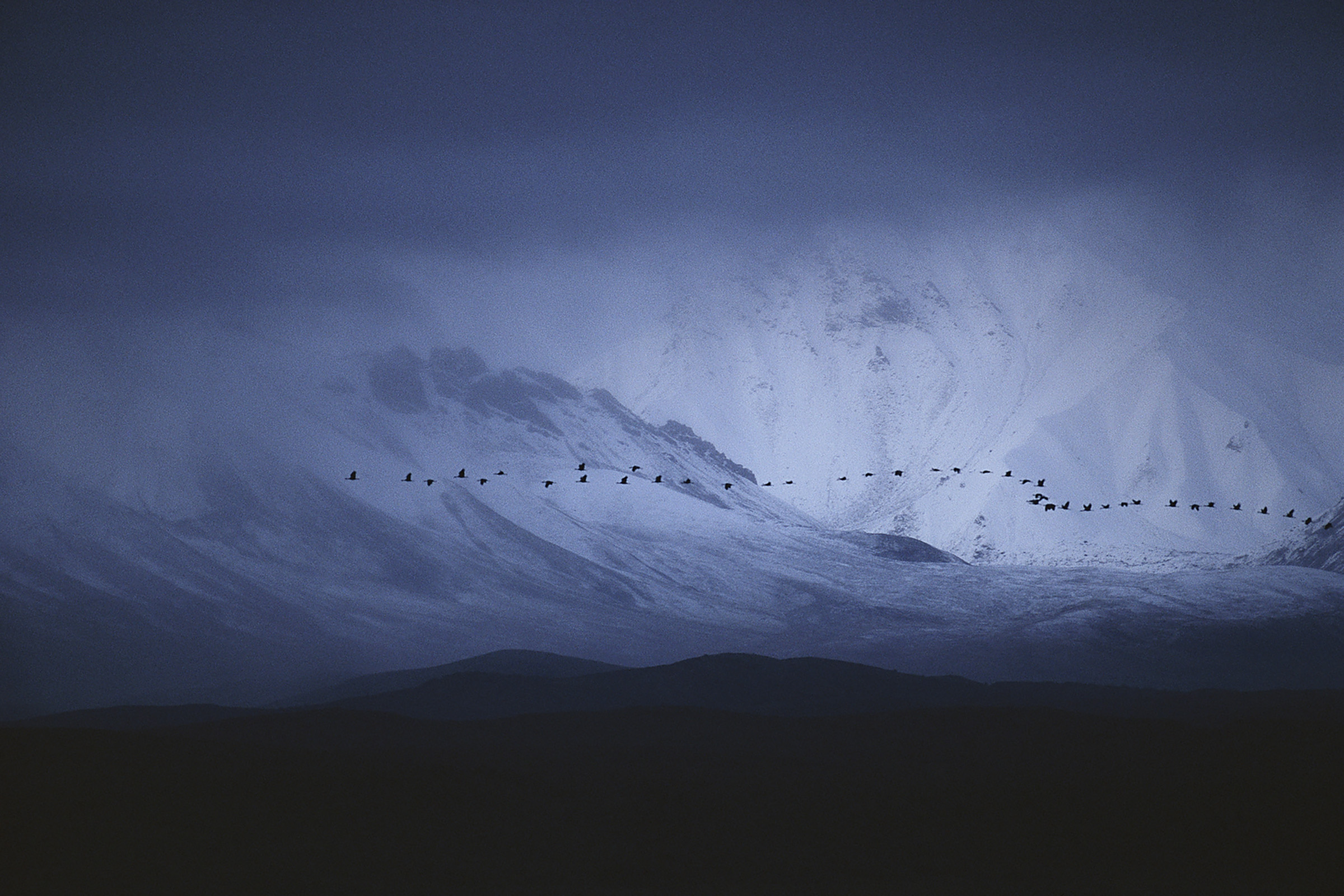 Sandhill cranes on migration flying across the face of the Alaska Range in Denali National Park. (Michael Forsberg)