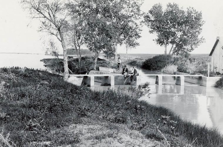 orchard alfalfa canal header