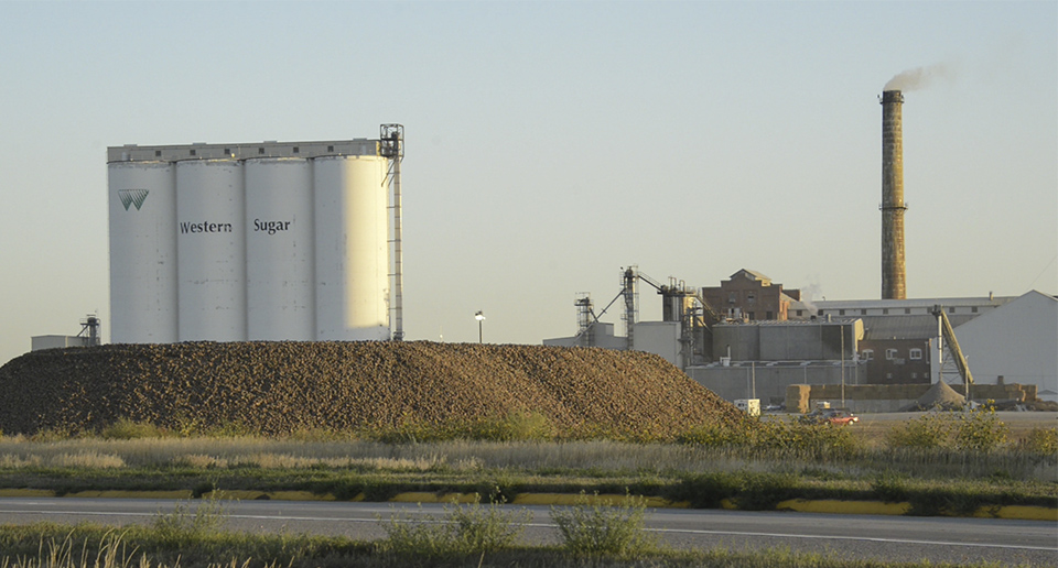 Sugar beets piled outside Western Sugar in Scottsbluff, Neb. (Peter Stegen)
