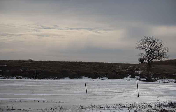 The wetland where a whooping crane spent the night in November, now frozen over. (Ariana Brocious)