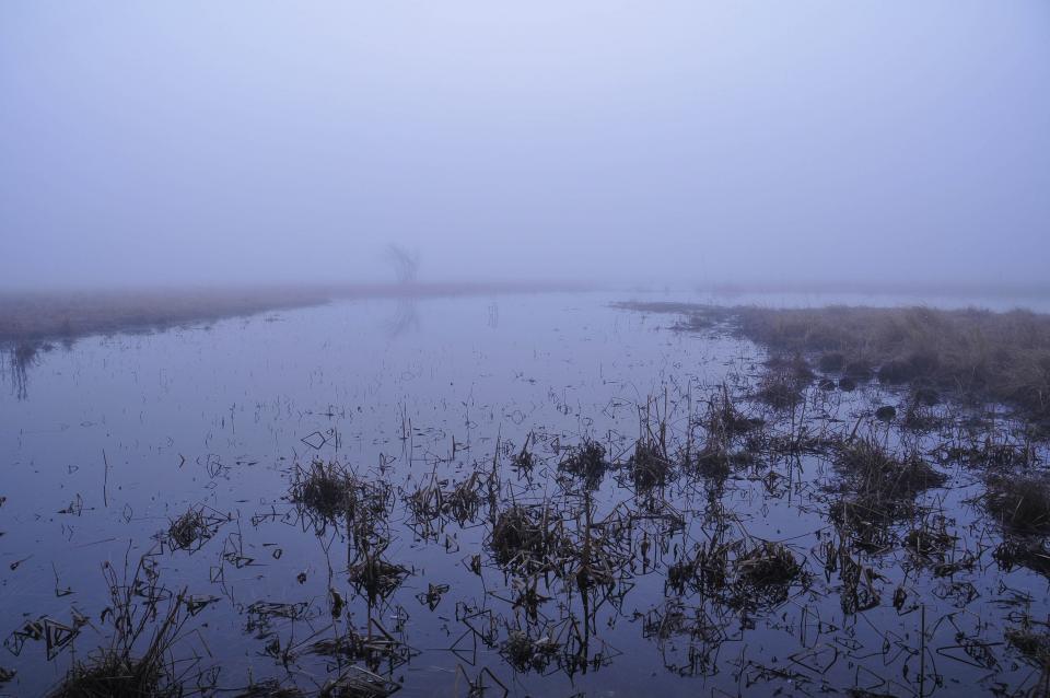 Foggy, lavender air engulfs Mormon Island on March 16, 2012 at 7:30 AM.