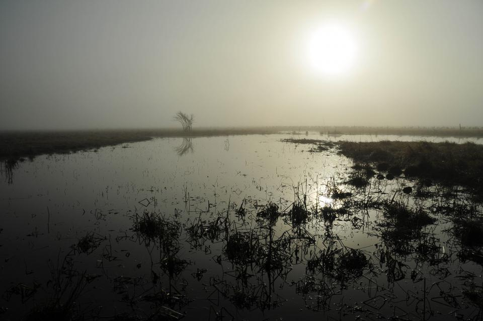 The sun's reflection on the surface water of the wet meadow begins a new day for Sandhill Crane foraging, bathing, and dancing. They can be seen in the background fields starting at 8:45 AM.