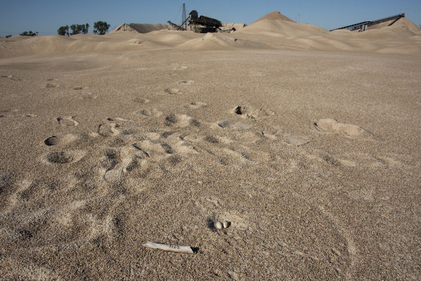 Interior least tern nest on a Western Sand and Gravel mine. (Mariah Lundgren)