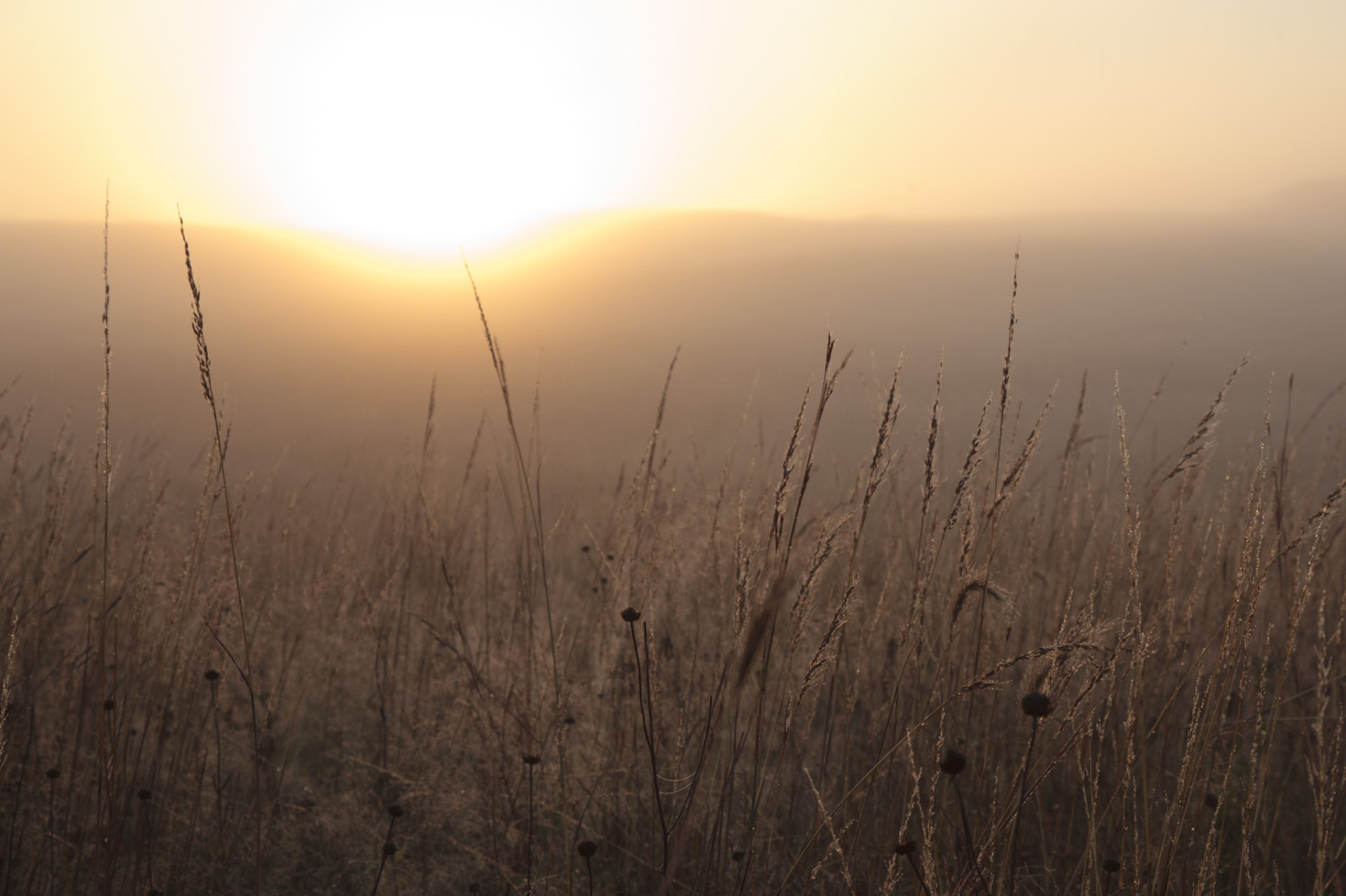 Sunrise on a foggy morning at The Nature Conservancy's Platte River Prairies. (Evan Barrientos)