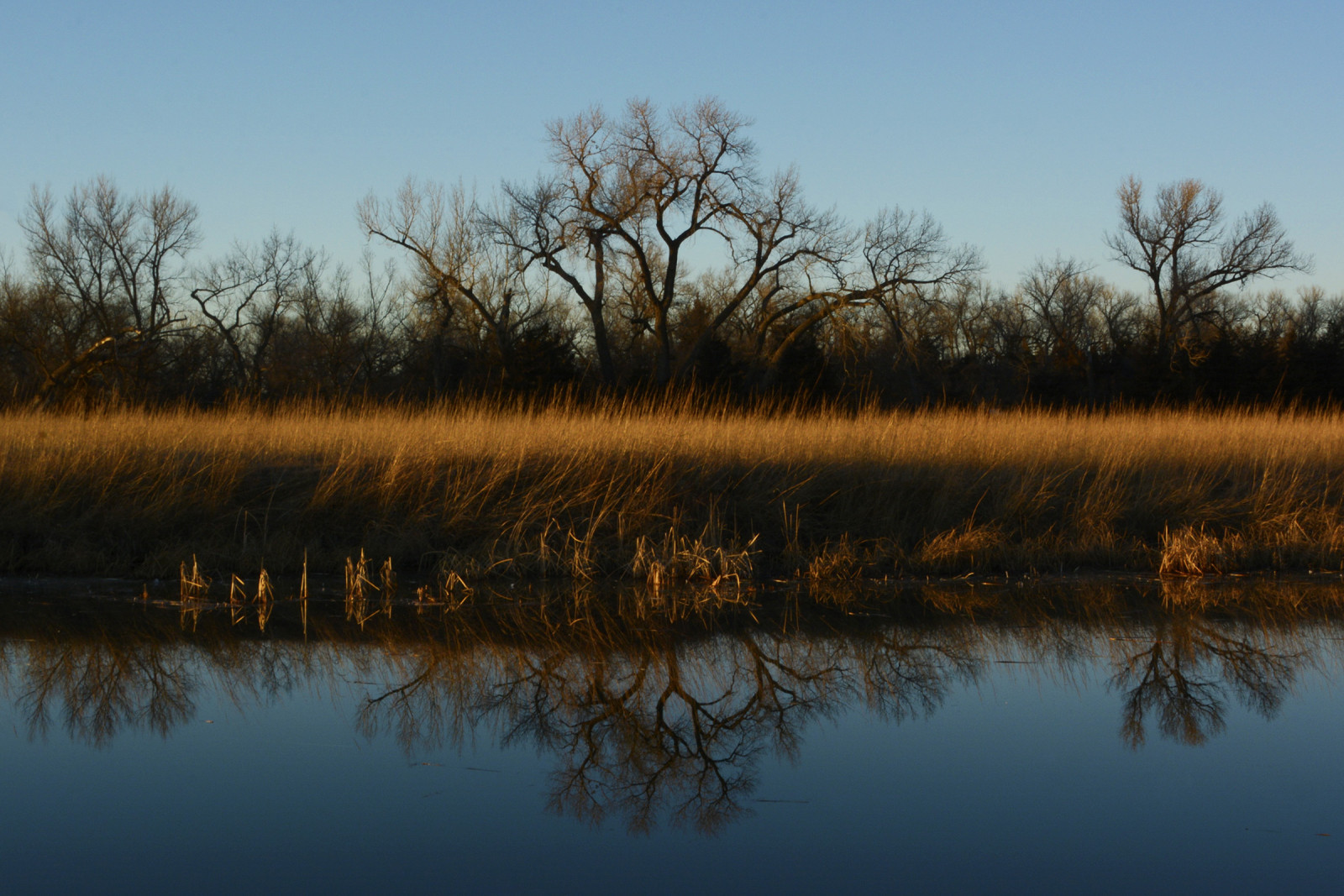 A prairie slough with a backdrop of cottonwood trees at the Crane Trust. (Mariah Lundgren)