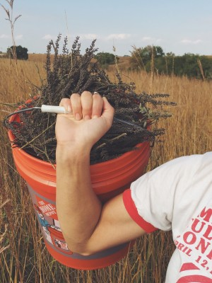 Seed is collected by hand from a Nebraska prairie. (Prairie Plains Resource Institute)