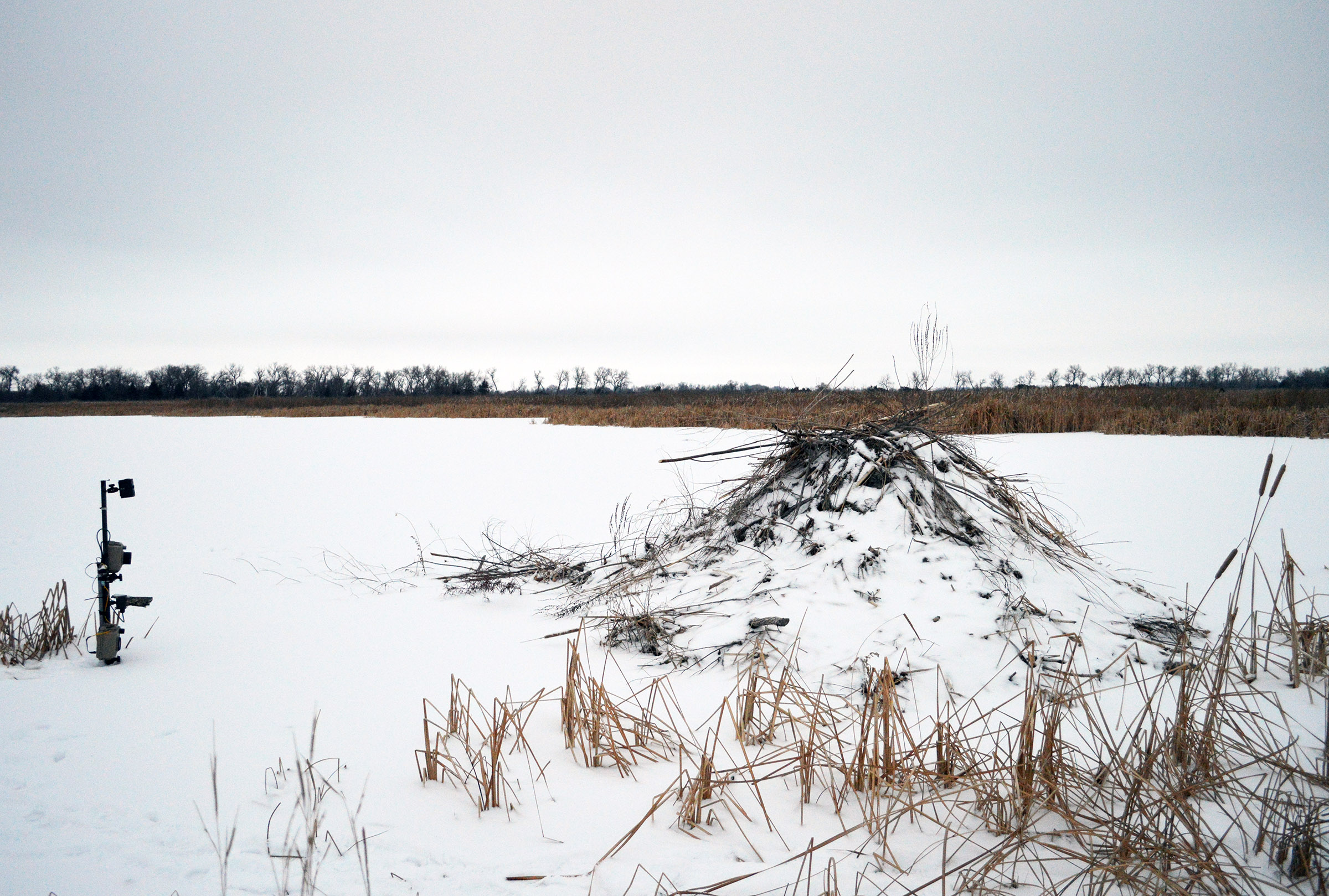 Study site for North American beaver (Castor canadensis) behavior analysis