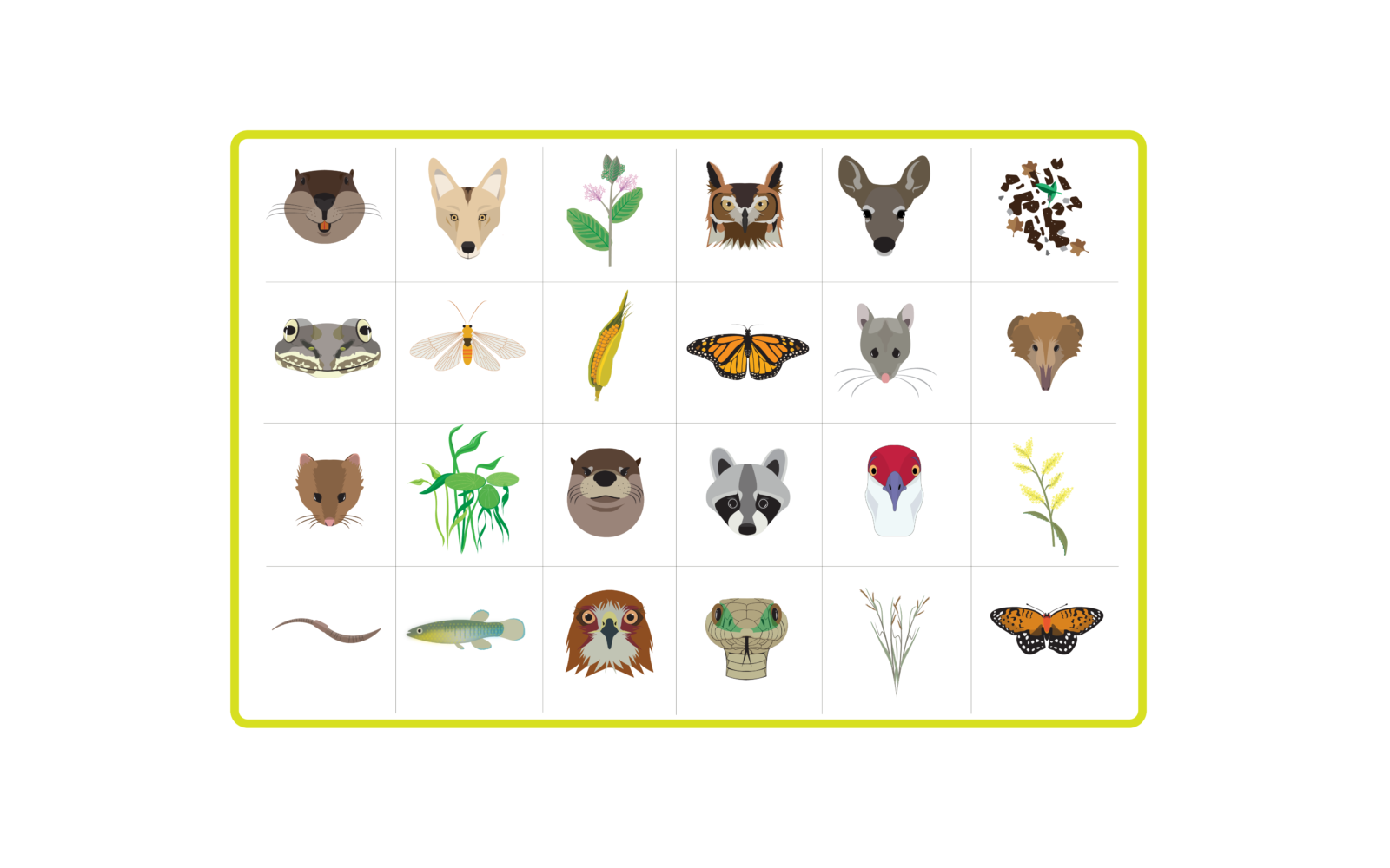 food chains and webs Food web / food chain vocabulary word list a list of words related to food webs and food chains click here for k-3 themes all themes animals food people plants sports.