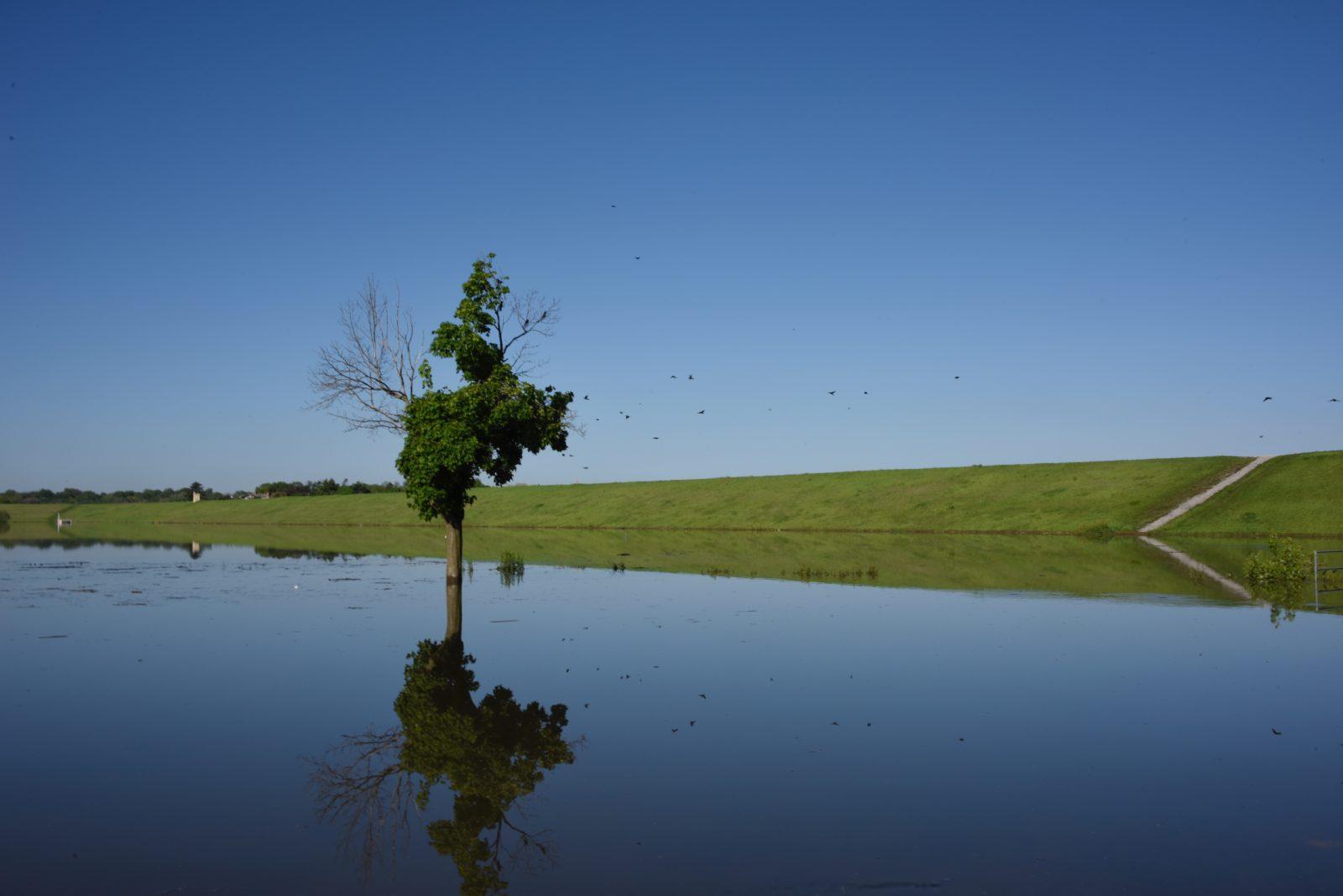 High water at Holmes Lake creates reflections (Grace Bullington)