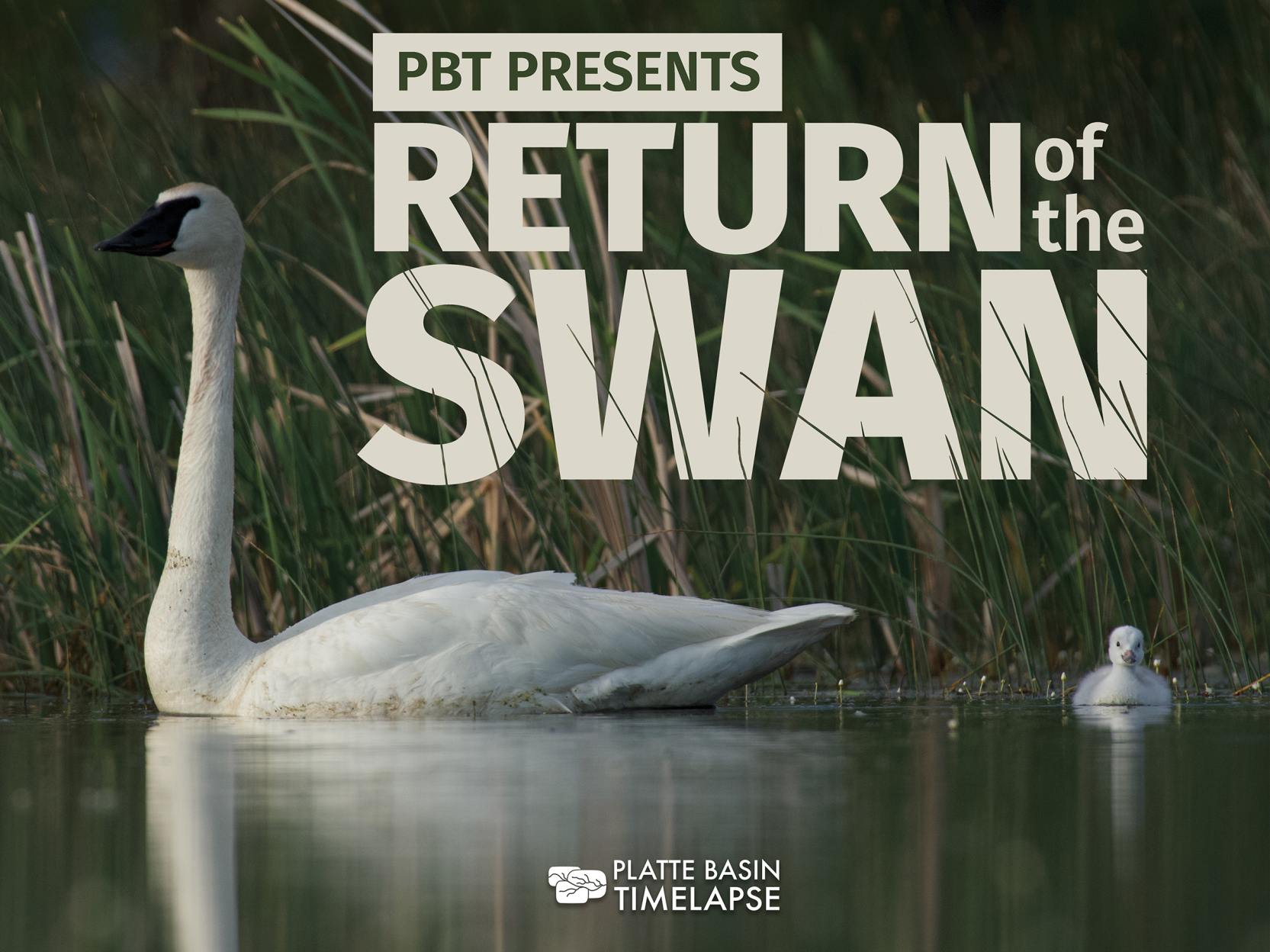 Return of the Swan: Film